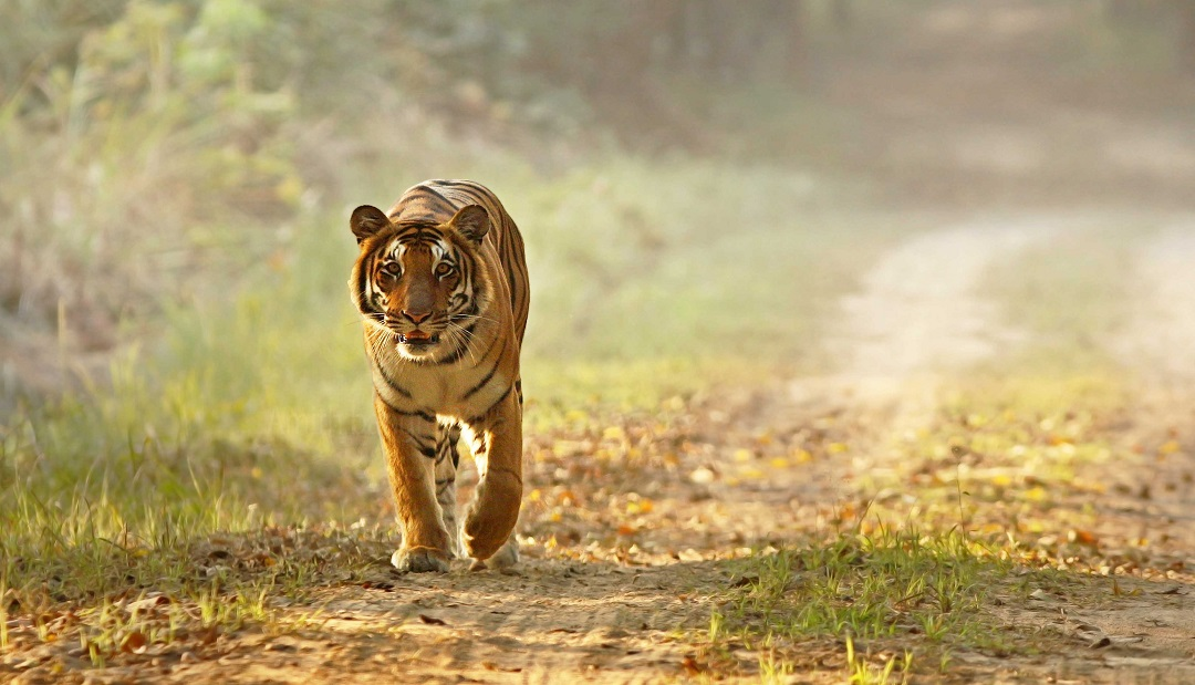 Dudhwa Tiger Reserve, Dudhwa National Park TOur Packges
